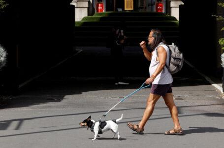 Investigadores confirman que los perros pueden contraer el coronavirus de sus dueños