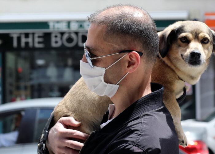 Dan a conocer los síntomas que puede provocar el covid-19 en perros y gatos