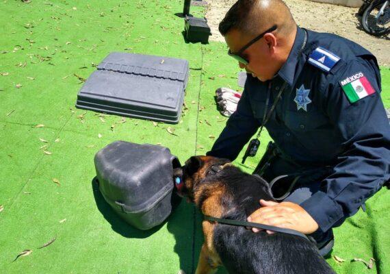 Participan niños en entrenamiento virtual con «perros policía»