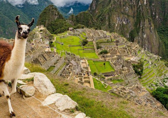 Perú desarrolla un tratamiento contra el covid-19 utilizando anticuerpos de las llamas