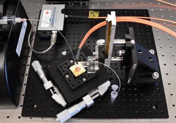 Desarrollan una prueba de anticuerpos de coronavirus del tamaño de un microchip que arroja resultados en 30 minutos