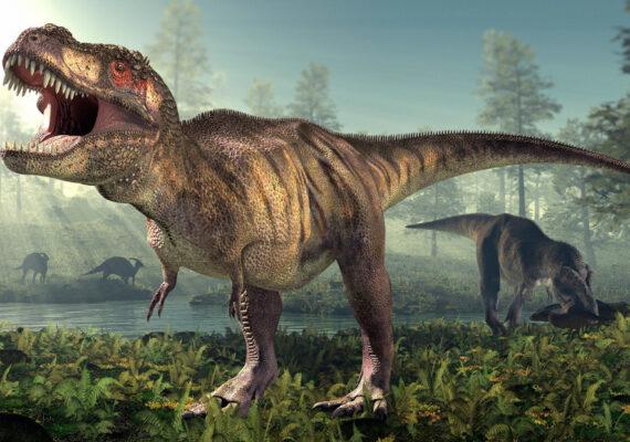 Paleontólogos estiman el peso aproximado de los 'Tyrannosaurus rex'