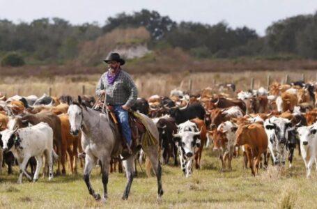 Desaparece AMLO apoyos a agricultores y ganaderos