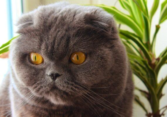 """Venden por 130.000 dólares a un gato que """"hace milagros y cumple tres deseos"""""""