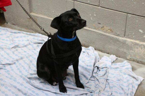 Invitan a adoptar animales en Centro de Control Animal de Tijuana