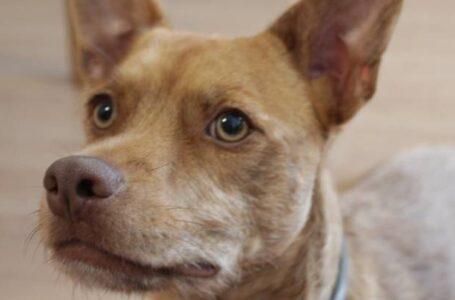Realizan primer decomiso de mascotas del año en Tijuana