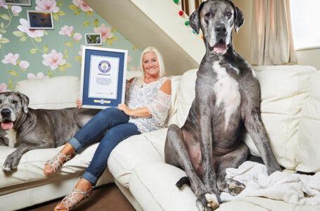 Fallece el perro más grande del mundo