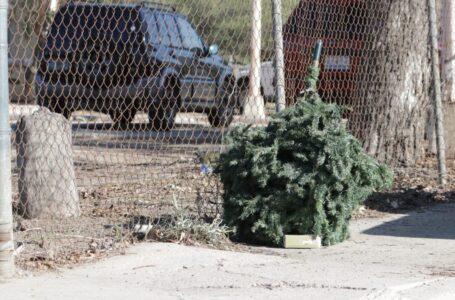 Disponen de centros de acopio para árboles navideños