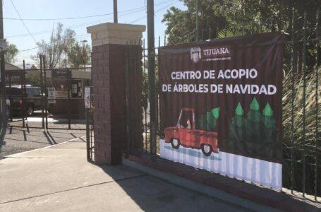 Parque Morelos recolectará arbolitos de navidad