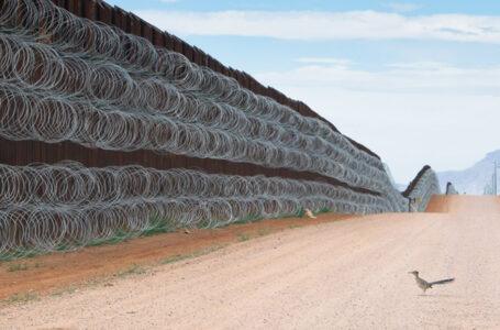 El autor que captó a un correcaminos «bloqueado» en el muro fronterizo entre México y EE.UU. gana el premio al Fotógrafo de Aves 2021